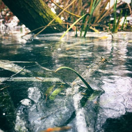 Frozen Pond Pond Nature Outdoors Leaf Water Tranquility Beauty In Nature
