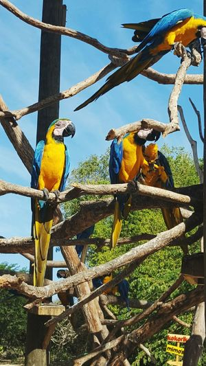 Paseo de domingo Aviario Nacional Animal Wildlife Outdoors Parrot Nature Beauty In Nature Animals In The Wild Colombia ♥  Cartagena/Colombia