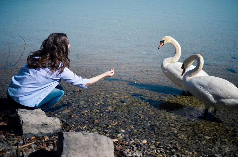 Animal Wildlife Water Animals In The Wild Nature Vertebrate Day One Person Group Of Animals Full Length Casual Clothing Bird Child Childhood Rear View Solid Leisure Activity Hairstyle Outdoors