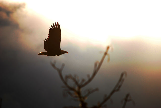 A Moment In Time Beauty In Nature Eagle In Flight Eagle Portrait Eaglephotography Eagles Hiawatha So Beautiful