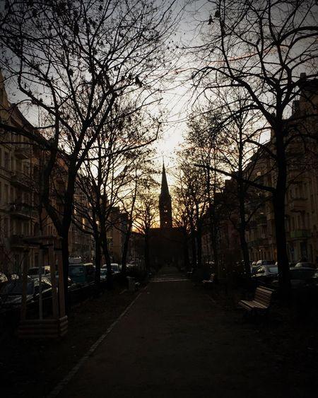 Sun shining through trees in city