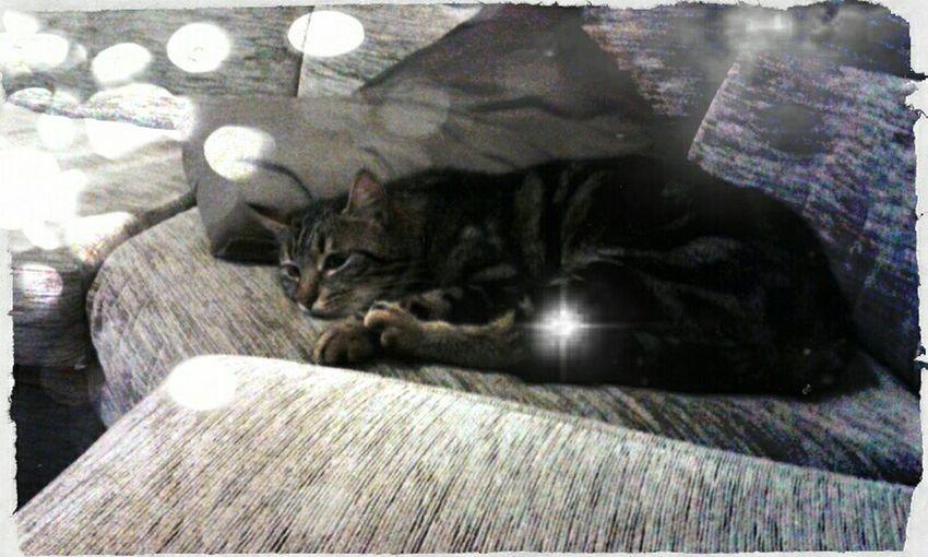 Relaxing Cat Taking Photos Enjoying Life Goodnight