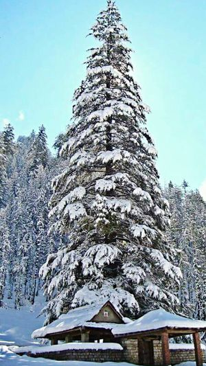 Winter in Himachal Snow Winter Cold Temperature Tree Nature Beauty In Nature Outdoors Forest Arcitecture Mountain Temple