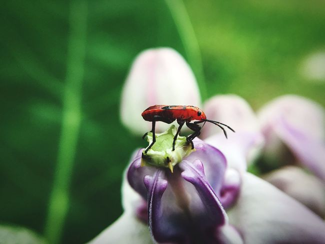 Life of Bug, life in nature Bug Forest Grassfield Photo Zoom Macro Bug Macro Bugs Beautiful Life Nature Bug Life Bugs Life Bugs Flowers, Nature And Beauty Flowerlovers Beautiful Nature Garden Plant Flower Tree Crown Flower