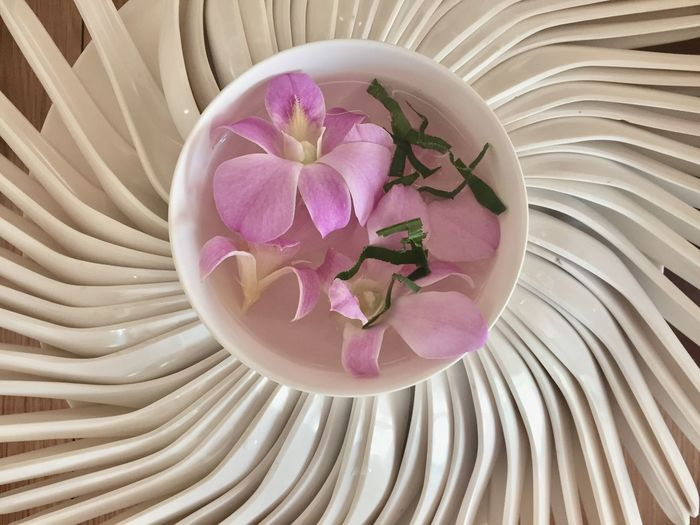 Orchid flower with spoon Flower Freshness Pink Color Plant Petal Flowering Plant Beauty In Nature Indoors  Fragility Vulnerability  Close-up Directly Above No People High Angle View Nature Still Life Inflorescence Flower Head Bowl Table