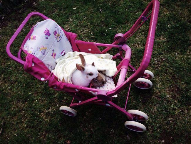 going for a ride! EyeEm Best Shots EyeEmBestPics Cute Animals