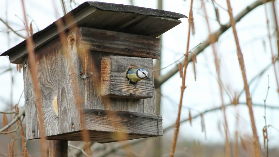 Great tit in house