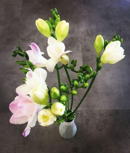 Flowers Flower Blumen Blumenpracht🌺🍃 Blumenfotografie Interior Design Fresie Beauty In Nature Beautiful Home Floor Minimalism Amazing Plants
