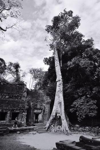 Old ruin tree against sky