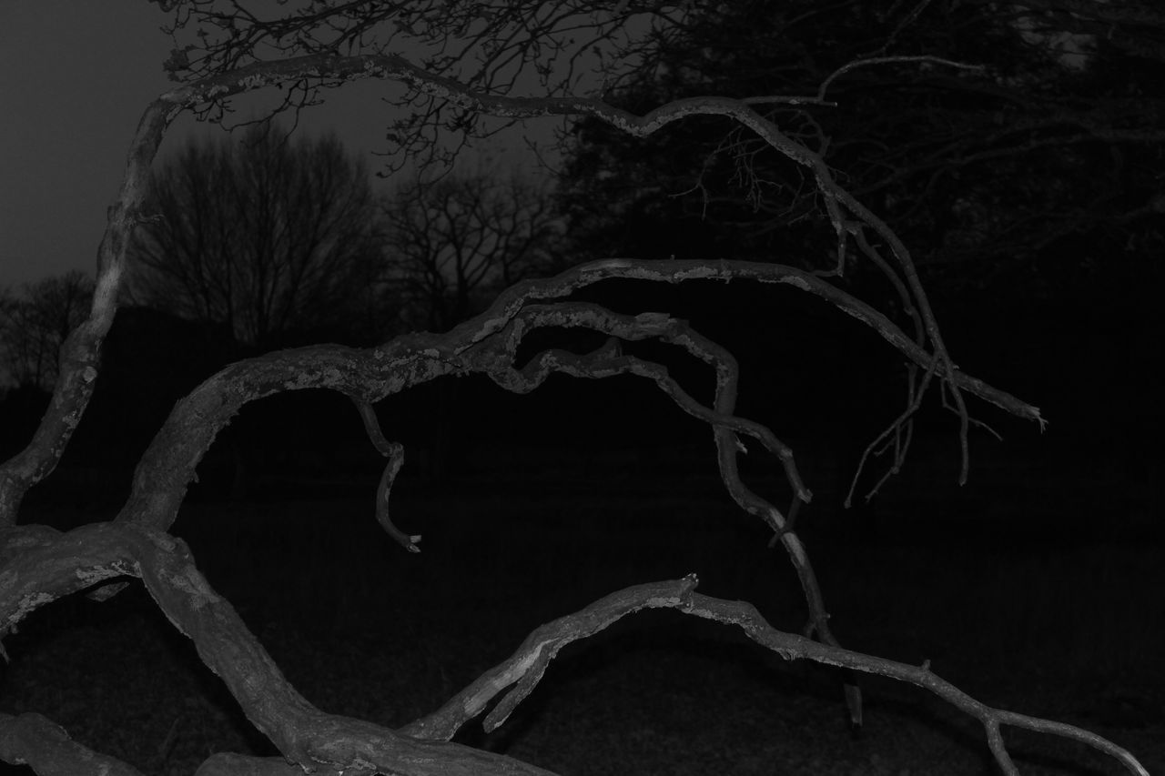 tree, bare tree, tranquility, no people, nature, outdoors, winter, night, branch, scenics, cold temperature, beauty in nature, close-up, sky, dead tree