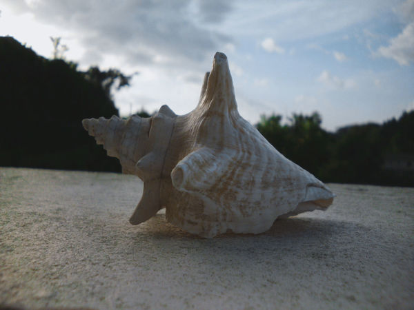 Close-up of seashell sitting on ledge. Cloudy Sky Daytime Nature Sitting View Beach Blue Close Up Close-up Closeup Clouds Focus Focus On Foreground Foreground Ledge Lighting Outdoor Outdoors Outside Sea Seashell Shell Sky