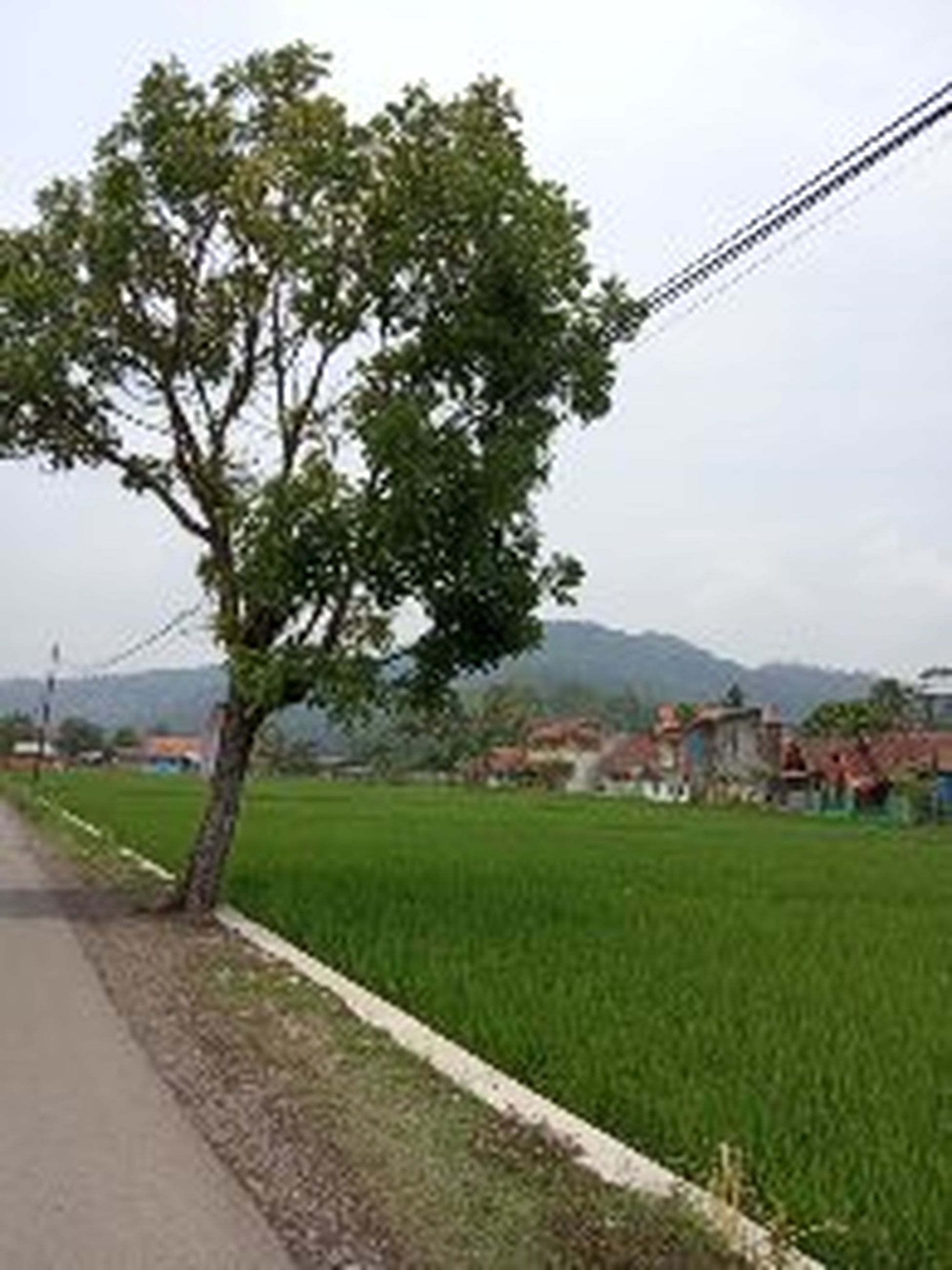 plant, tree, nature, sky, landscape, grass, agriculture, land, architecture, rural scene, road, environment, field, city, building exterior, building, no people, outdoors, built structure, growth
