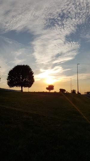Sunset Tranquil Scene Landscape Scenics Tree Beauty In Nature Sky Sun Grassy