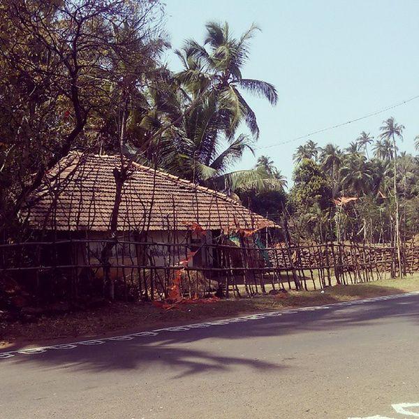 Village House Coconut Trees Nature Konkandiaries Malvan Maharashtra