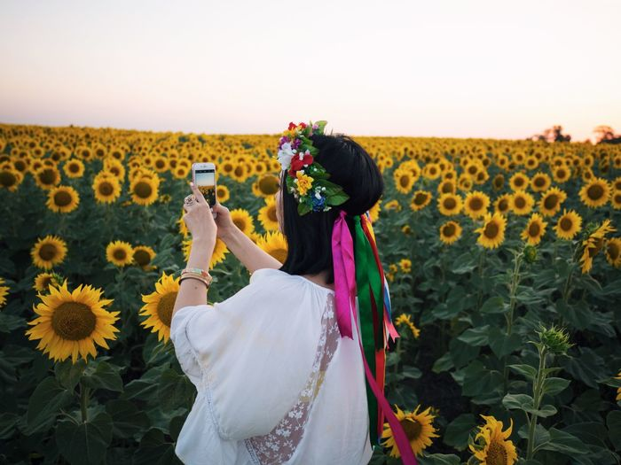 Woman Photographing Sunflowers Field Through Mobile Phone Against Clear Sky