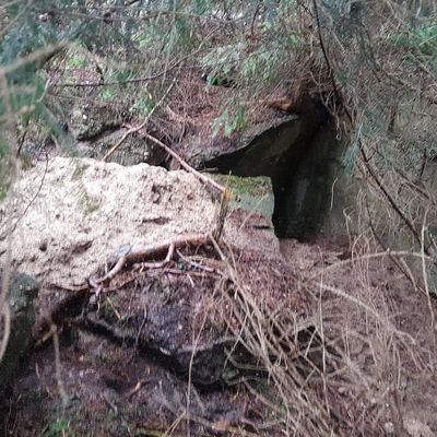 Outdoor Lüneburgerheide Wandern #bushcraft Bunker Lostplacesgermany Lostplaces Day No People Outdoors Nature Growth Close-up Tree
