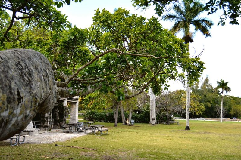 Matheson Park Nature Coral Gables Miami Treehugging