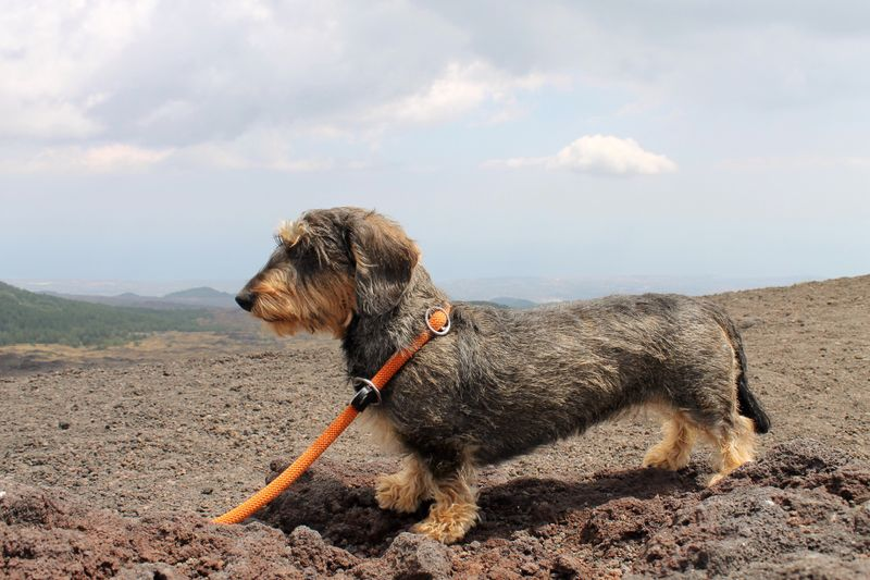 Domestic Animals Animal Themes Mammal Dog One Animal Pets Sky Landscape Nature No People Day Outdoors Sand Vulcano Etna, Mountain, Sicily, Frainf Mydog♡