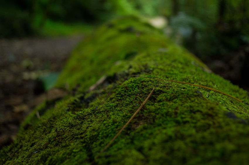 Colorful Costa Rica Depth Of Field Landscape Nature Nofilter Outdoors Textures And Surfaces