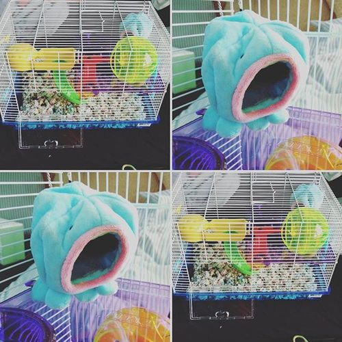 The cage seems a bit big. This octopus looks a little scary. But omg. Now I need this mouse. Mouse Mousecage Mousey Mouseowner Cute Cage Cutie Awe
