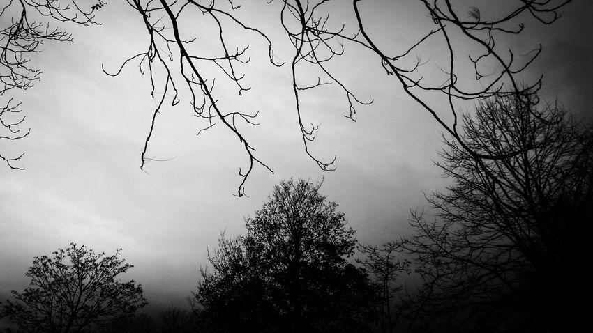 Monochrome Blackandwhite Christmas Tree EyeEm Best Shots - Black + White