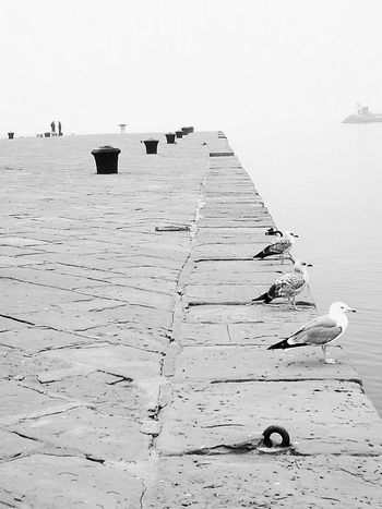 The City Light three seagulls, Trieste Sea Nature Vacations Outdoors No People Water Landscape Day Sea Side City Blackandwhite Photography Urbanphotography Beauty In Nature The Street Photographer - 2017 EyeEm Awards The Portraitist - 2017 EyeEm Awards Adventures In The City