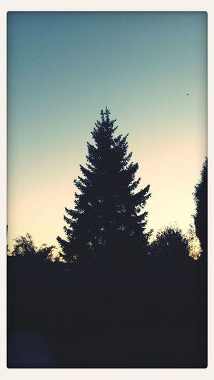 Laatste zomerdag , goed morning ! First Eyeem Photo