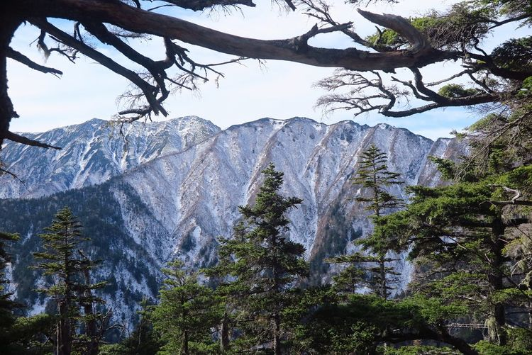 Tree Low Angle View Pinaceae No People Pine Tree Mountain Sky Day Outdoors Forest Montagne Beauty In Nature Nature Scenics Neige❄ Hiver Japan Japon Tree