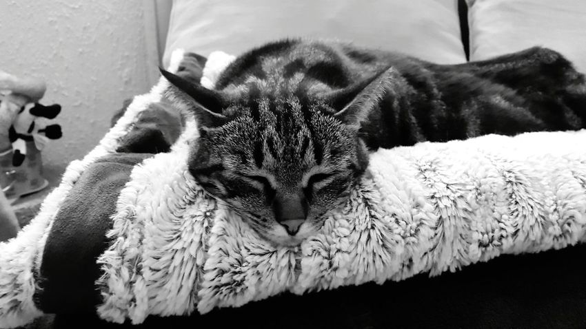 My cat rests. . . . . as usual Ilovemycat Blackandwhite Photography Cute
