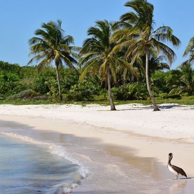 Paradise found. Akumal Akumal Mexico Pelican First Eyeem Photo
