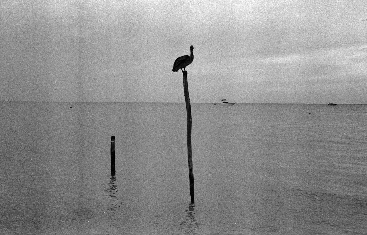 BIRD PERCHING ON WOODEN POST IN SEA