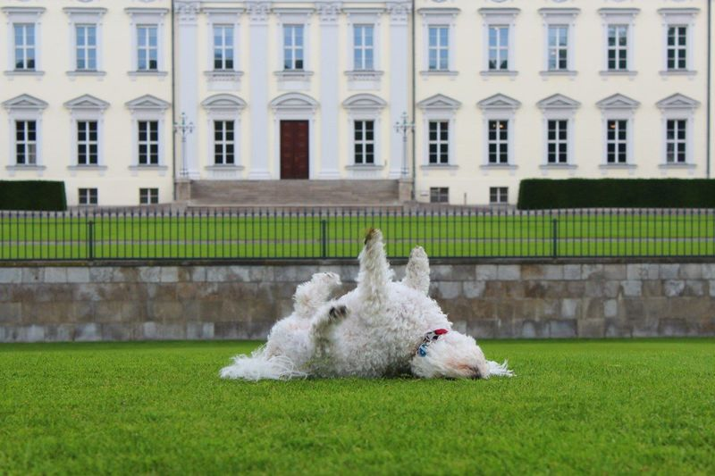 View of a dog on field against building
