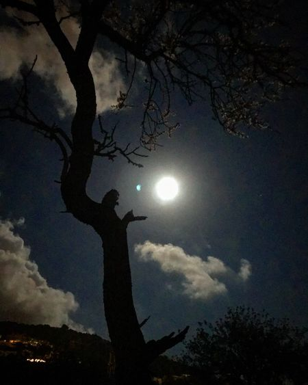 Just howling UNESCO World Heritage Site Blessedandthankful Grateful Mobilephotography Beautiful Energy Tranquility Fullmoon Tree Silhouette Moon Sky Outdoors Beauty In Nature