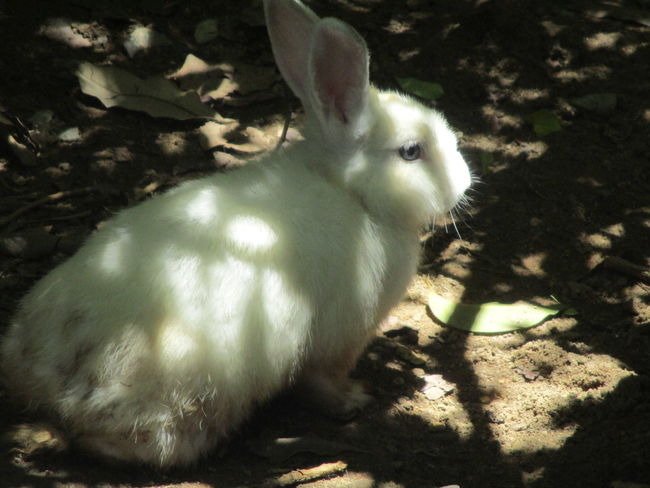 animal Animal Themes Close-up Day Domestic Animals Indoors  Mammal Nature No People One Animal Pets Rabbit Rabbit ❤️ Shadow Sitting Sunlight กระต่าย กระต่ายตัวน้อยๆ