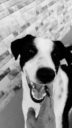 Monochrome Photography Dog Domestic Animals Pets Animal Themes One Animal Close-up Animal Head  Mammal Animal Zoology Looking Loyalty No People Snout Animal Nose