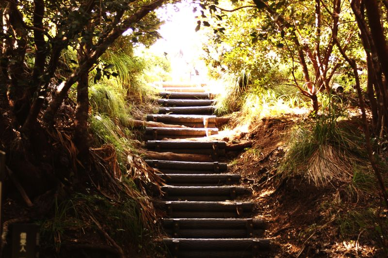 Ogasawara Ogasawara Island Summer Tree Plant The Way Forward Nature Direction No People Staircase Sunlight Outdoors Forest Branch