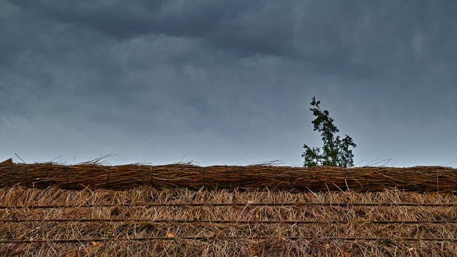 摇摇小松树,荡荡茅草屋,风起风还定,日落日复出。 tree Cloud - Sky Plant Outdoors Roof Tree