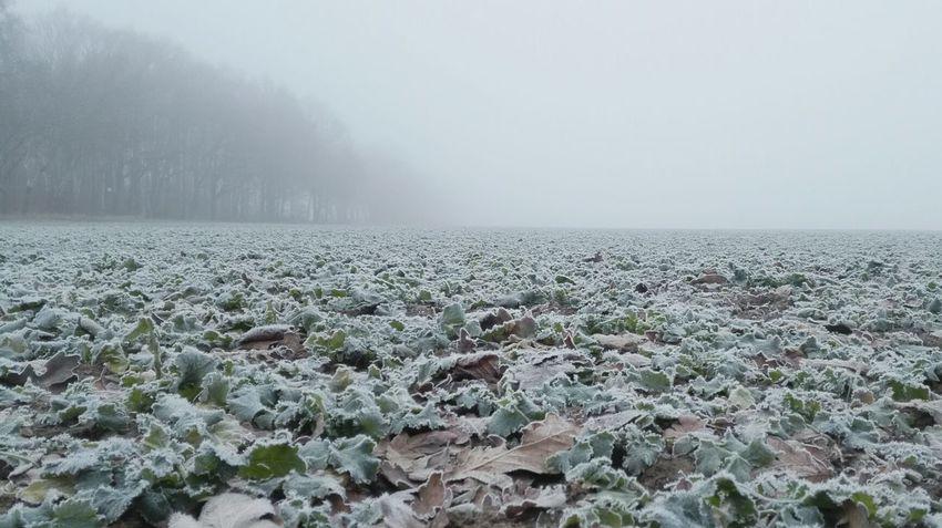 weite offene Landschaft in kalten Nebel gehüllt Landscape Fog Winter Wintertime Frosty Morning Winter Landscape Winter Morning Cold Temperature Nature Foggy Morning