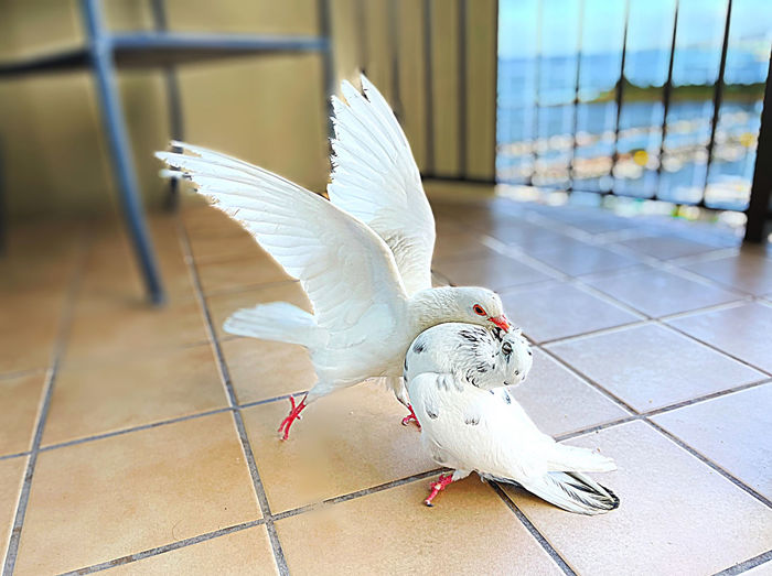 Close-up of white bird flying