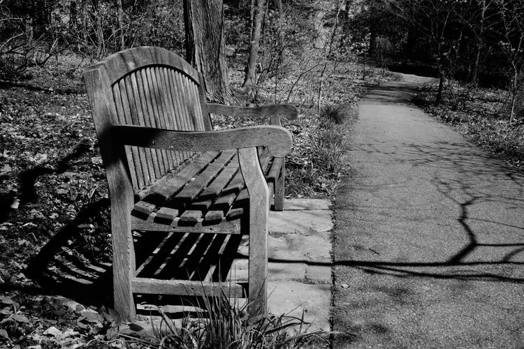 Longwood Gardens Nature Outdoors Tranquil Scene No People Day Walkway Scenics Bench Black And White gardens woods path spring PA park restful