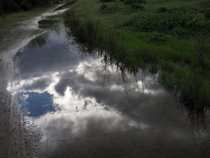 Water Reflection Tree Close-up Sky Rushing Puddle Rainy Season Standing Water Calm