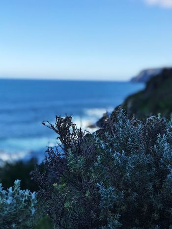 Sky Plant Water Nature Sea Beauty In Nature No People Scenics - Nature Day Clear Sky Outdoors Tree Growth Land Focus On Foreground