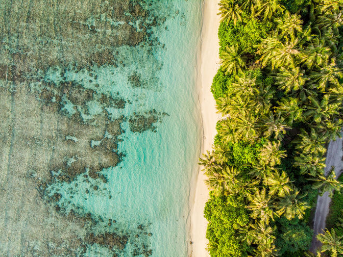 Maldives Island seen from above, palm trees and blue water Drone  Droneshot Aerial View Island Tropical Maldives Blue Water Beach Waves Crashing From Above  Palm Tree Palm Trees Paradise Blue Green Bikini No People Waves, Ocean, Nature Islands Unspoiled Nature Nature Landscape Landscapes Paradise Beach Perfection