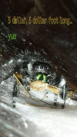 Check This Out Hello World Macro Photography Sacramento Spider Spider World Lunch Time! Eyeem Photography