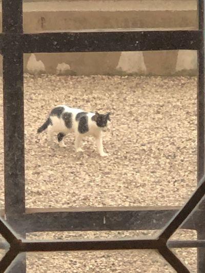 Dog running on floor