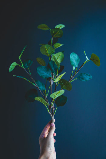 Close-up of hand holding plant against blue background