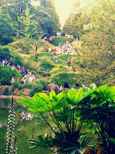 Serralves Serralves Em Festa 2015  Oporto Portugal With Friends Party Party Time! Awsome Colorful People Walking  Beautiful Beautiful Garden Small Lake