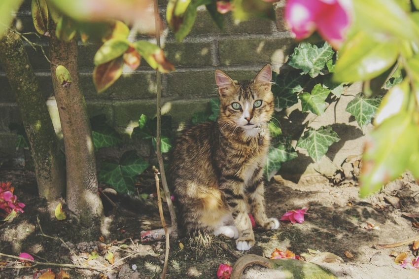 Beauty In Nature Cat Cats Cats Of EyeEm Cute Meow Photography Portrait Cat Photography Animal Themes Animal Flowers Spring Spring Flowers EyeEm Selects Portrait Pets Leopard Feline Domestic Cat Looking At Camera Sitting Plant Kitten Big Cat Young Animal Tabby Cheetah