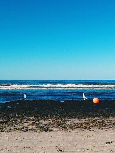 That Red Dot Again Seagulls Beachlife