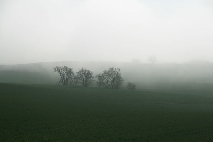 Misty Shades Of Winter Sweden Winter Beauty In Nature Day Field Fog Foggy Foggy Morning Grass Hazy  Landscape Majestic Mist Misty Morning Nature No People Outdoors Scenics Sky Skåne Tranquil Scene Tranquility Tree